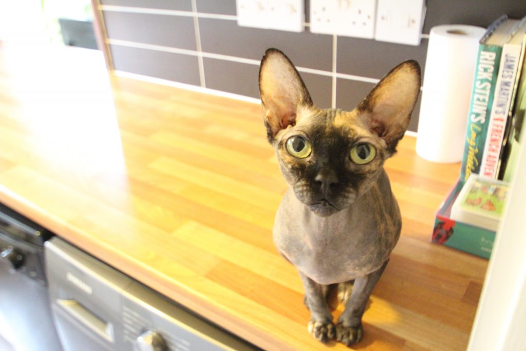 Tidying up in the kitchen with a cat
